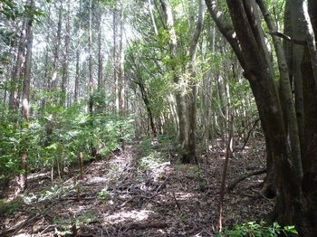 P1170676植林境.JPG