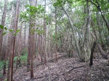 P1170677左ヒノキ林境.JPG
