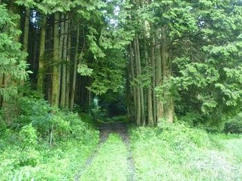 P1170734植林帯に入る.JPG