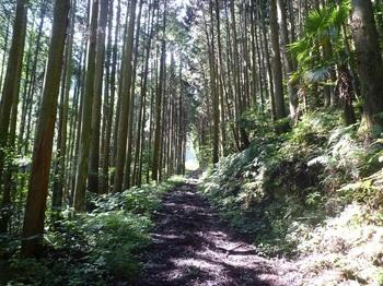 P1170740植林沿い.JPG