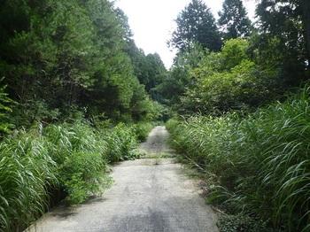 P1170763舗装林道.JPG