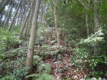 P1170772植林境.JPG