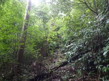 P1170775灌木の切り開きを直登.JPG