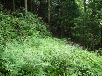 P1170825草被りの平坦地.JPG
