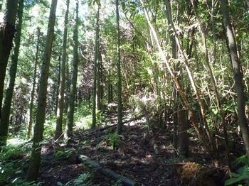 P1170852右の植林境尾根へ出る.JPG