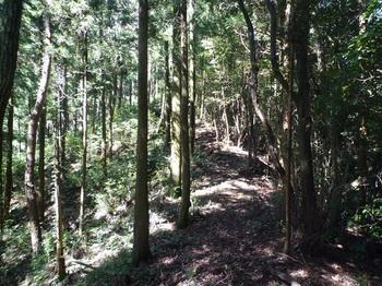 P1170882植林境.JPG