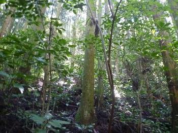 P1170897植林斜面の上り.JPG
