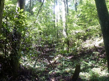 P1170922植林谷を詰める.JPG