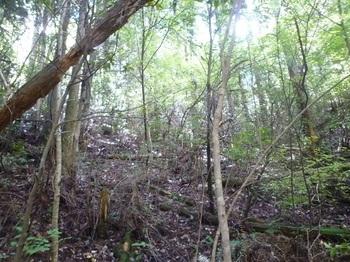 P1170924植林・灌木の小谷を詰める.JPG