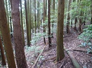 P1170948西へ植林斜面をトラバース.JPG
