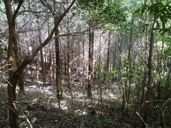 P1170964左(東方向)の植林谷.JPG