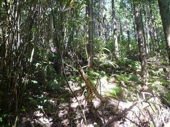P1180005植林境斜面.JPG