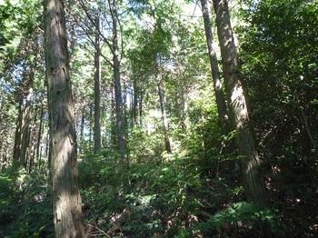 P1180011植林境.JPG
