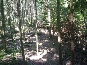 P1180014植林境.JPG