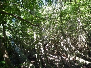 P1180017右の雑木疎林へ逃げる.JPG