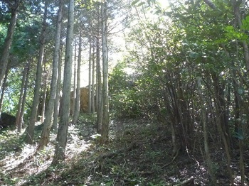 P1180031左ヒノキ林境.JPG