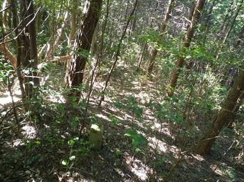 P1180112荒れ気味の植林境.JPG