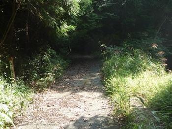 P1180265林道分岐(右へ).JPG