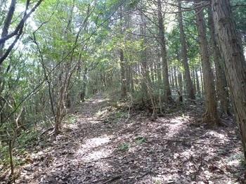 P1180305植林境の山道.JPG