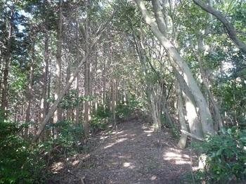 P1180427左植林(高木)境.JPG