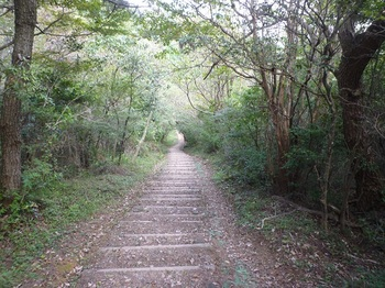 P1180498木段が並ぶ登山道.JPG