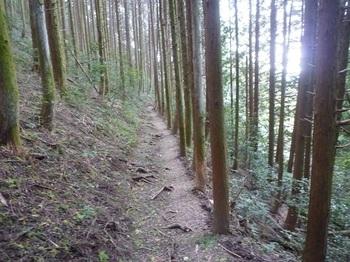 P1180502植林沿い.JPG