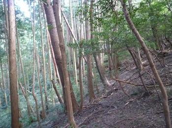 P1180559左下の植林谷.JPG