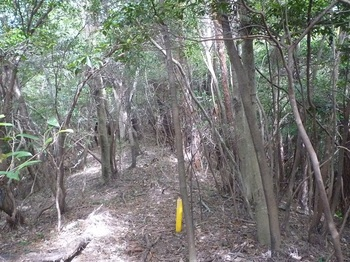 P1180572雑木疎林尾根の切り開き・プラポール.JPG