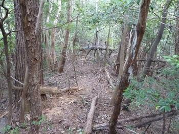 P1180575雑木疎林尾根の切り開き.JPG