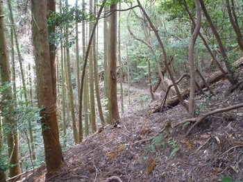 P1180583植林谷沿いの巻き道.JPG