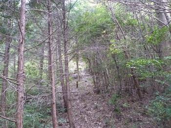 P1180594ヒノキ植林境.JPG
