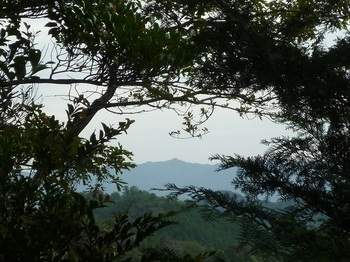 P1180598植林境の樹間に蕎麦ヶ岳.JPG