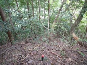 P1180605灌木.JPG