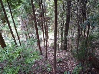P1180608下に林道が見える.JPG