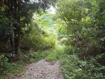 P1180613林道(右方向).JPG