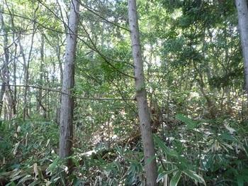 P1180667植林が終わる.JPG