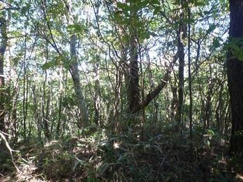 P1180691 649mピーク・植林境終わり.JPG