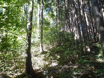 P1180713灌木・植林境.JPG