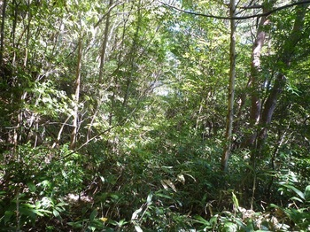 P1180719ササ被りの林道.JPG