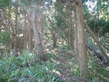 P1180729両側植林沿いの尾根道.JPG