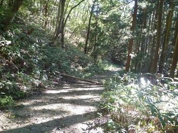 P1180778舗装林道.JPG