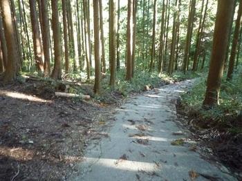 P1180780林道分岐.JPG