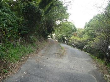 P1180819林道(左)分岐.JPG