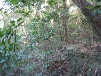 P1180900石垣沿いの巻き道.JPG
