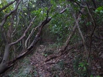 P1190008巻き加減の山道.JPG