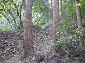 P1190174植林沿い.JPG