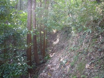 P1190176植林沿い.JPG