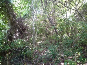 P1190219やや荒れた雑木灌木尾根.JPG