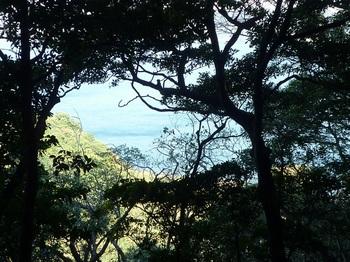 P1190274樹間に平茂海岸.JPG