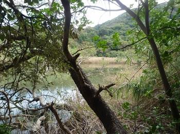 P1190460蛇の池.JPG
